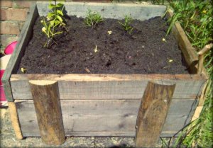 Herb Box Outside